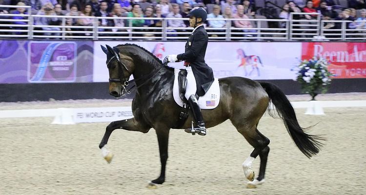 Custom Saddlery - Dressage Saddles - My Saddle